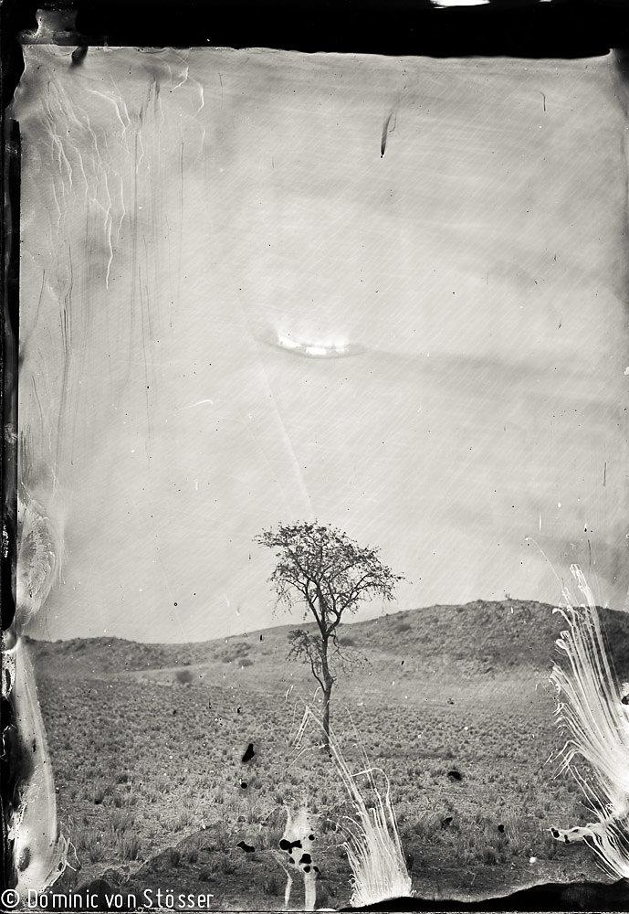 Der einsame Baum / The Lone Tree