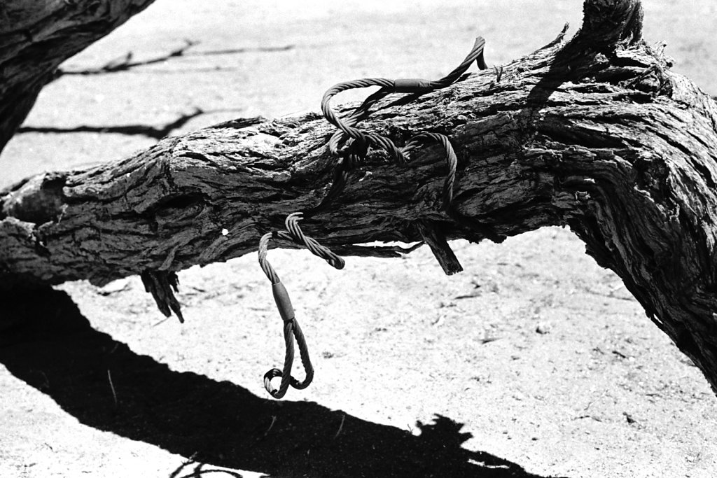 The Hanging Tree. Otjozondjupa.